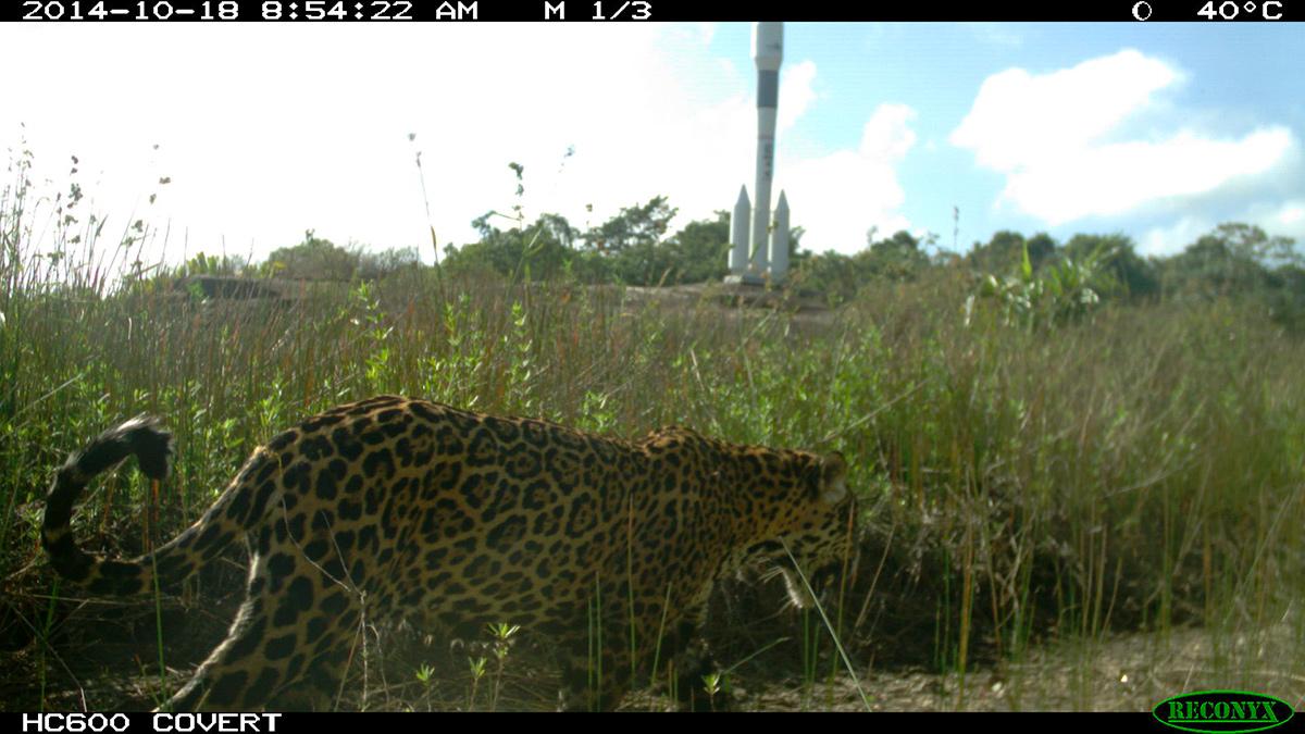 is_jaguar_biotope.jpg