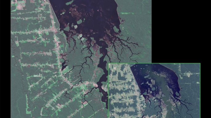 [1994-2015] Forêt Rondônia
