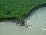 Vue aérienne de mangrove en Guyane