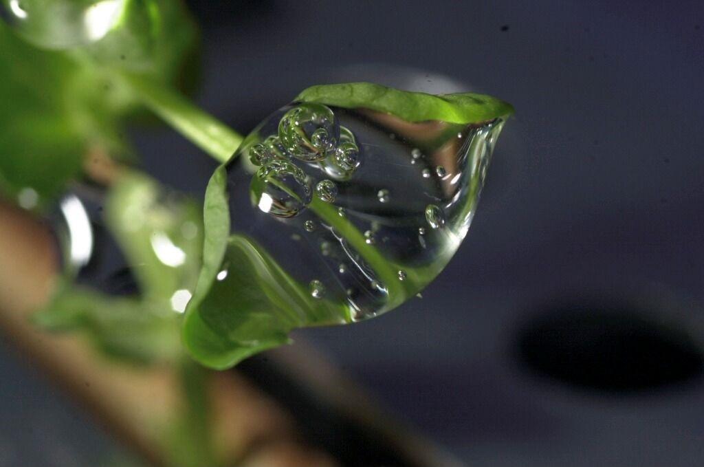 cnes macro d 39 une goutte d 39 eau sur un plant de petit pois dans l 39 iss. Black Bedroom Furniture Sets. Home Design Ideas