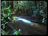 La surveillance de la forêt amazonienne