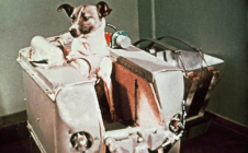 Laïka dans l'espace