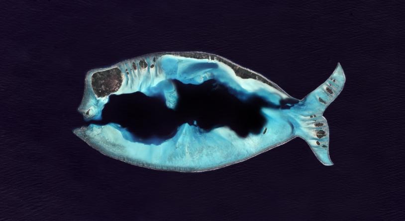 Poisson d'avril 2014 par Pléiades
