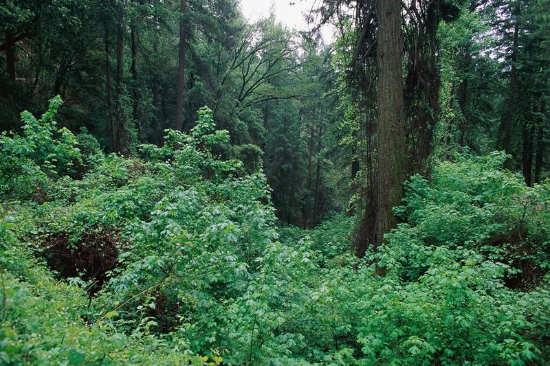VENµS monitors vegetation all over the planet ; credits CNES