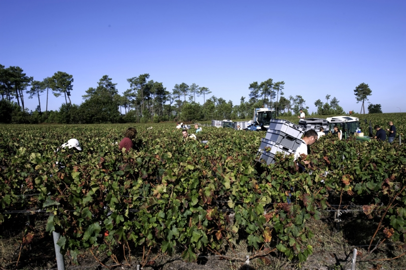 Satellite maps enable grapes to be differentiated before harvest. Credits: CNES.