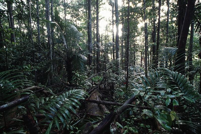 Les satellites servent aujourd'hui à diagnostiquer l'état de santé de la fôret amazonienne. R. Le Guen.