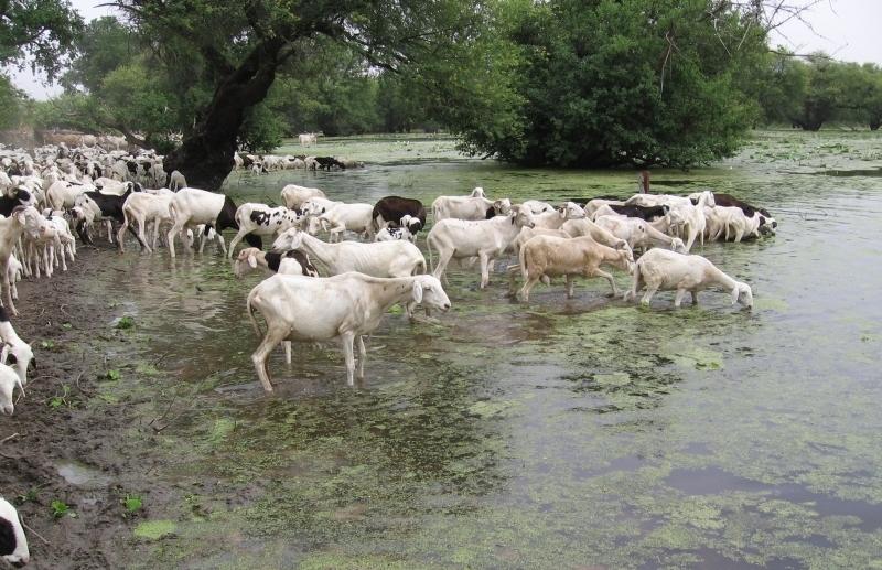 Un exemple de mare temporaire dans la région du Ferlo au Sénégal. Crédits : Jacques-André Ndione, 2006.