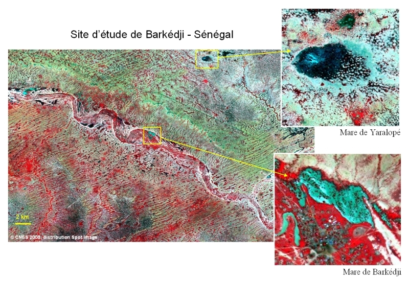 Satellite images of Barkedji, Senegal, acquired by the SPOT 5 satellite at a resolution of 10 metres on 26 August 2003. Credits: CNES/Spot Image.